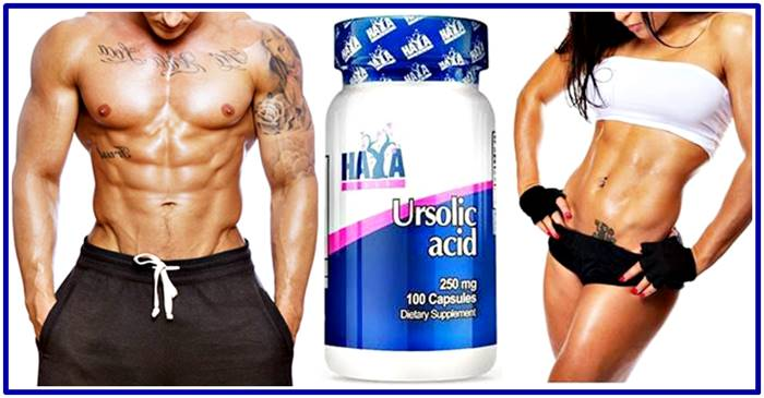 Burn fat and gain muscle by taking ursolic acid