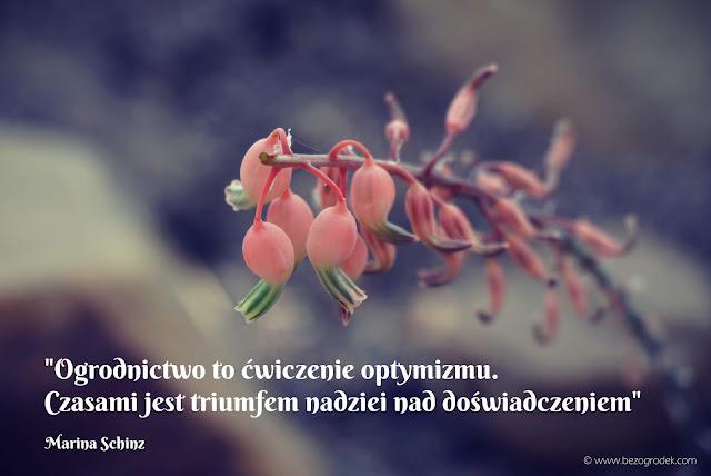 ładne powiedzenia o kwiatch
