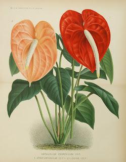 Kesegaran Bunga Dalam Rumah Anda