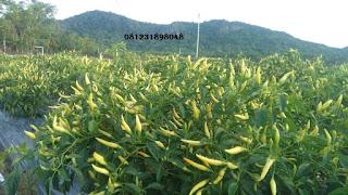 Agen Nasa Kecamatan Blitar 081231898048