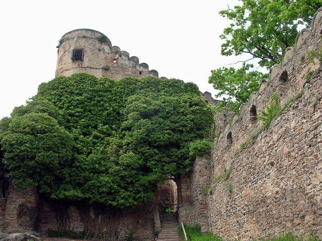warownia, bluszcz, zamek, mury