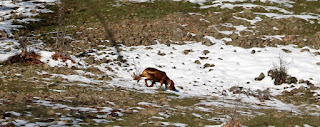 The hunting dog goes past