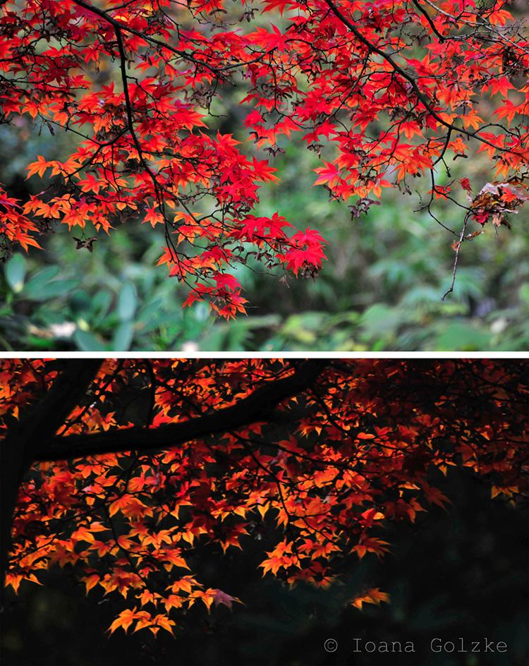 miss red fox herbstfarben. Black Bedroom Furniture Sets. Home Design Ideas