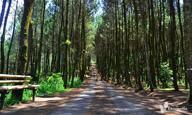 Hutan Pinus Magelang