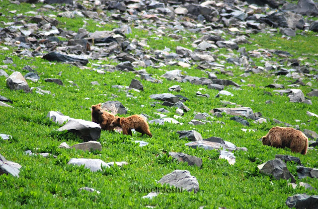 22-Dachigam-National-Park-Srinagar