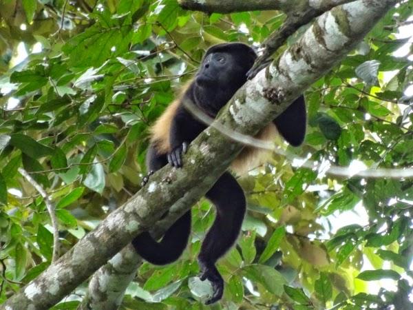 Those cheeky monkeys.