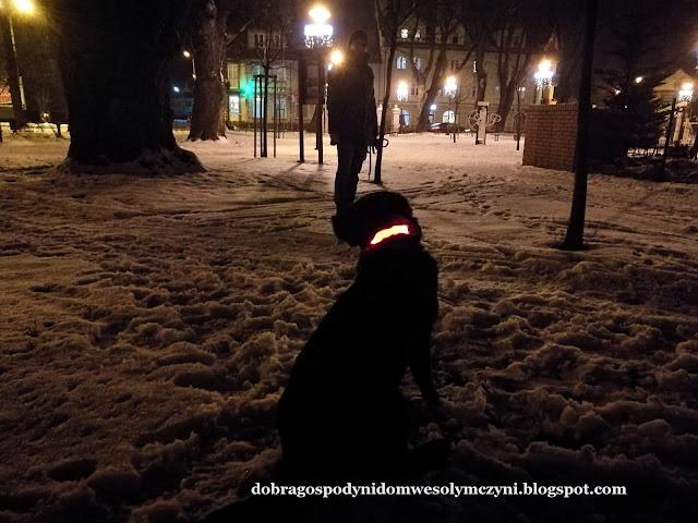 odblaskowa obroża, świecąca obroża dla psa