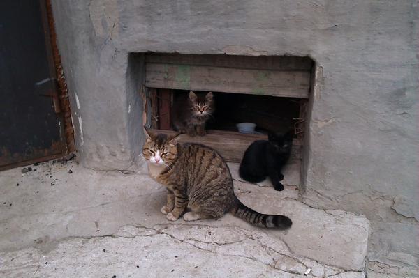 коты в подвале