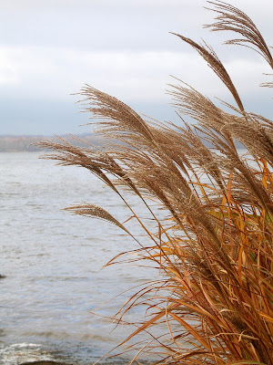 grasses, chesapeake bay, inspiration, water, wind