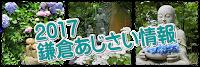 2017鎌倉のアジサイ