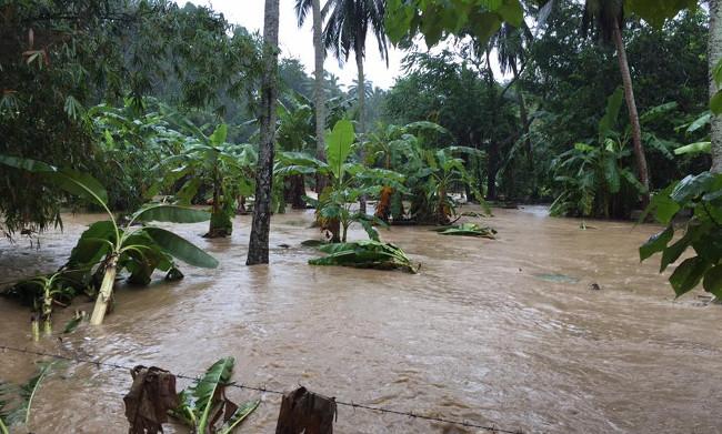 Банановая плантация под водой