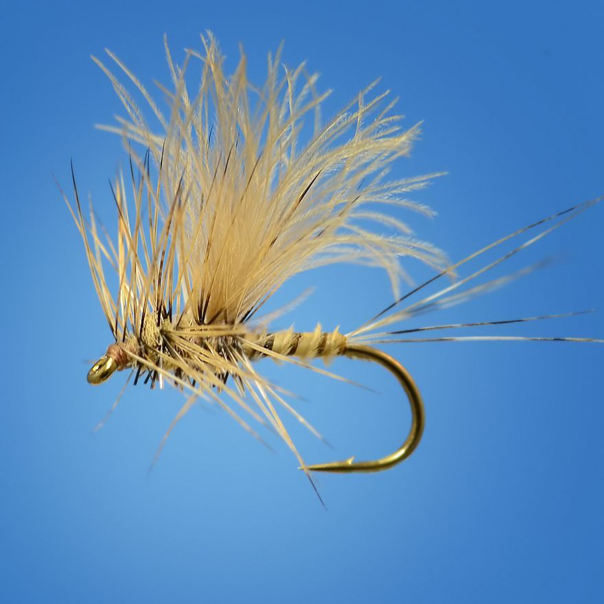 Biot CDC Callibaetis - Fly Fish Food -- Fly Tying and Fly Fishing