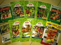 bibit buah tomat, buah tomat hibrida, benih tomat F1, benih tomat, lmga agro