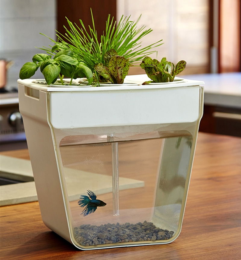 The aquafarm aquaponics fish garden for Fish tank herb garden