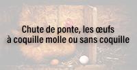 http://dogteur.blogspot.fr/2017/11/chute-de-ponte-les-ufs-coquille-molle.html