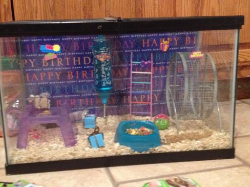 Charming Hammy: Birthday Hamster Cage Theme