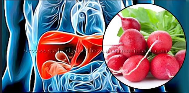 Bebida natural de rábano para proteger tu hígado y  vesícula, si deseas tener un hígado, vesícula y tiroides completamente sanos, hoy te traemos los beneficios del rábano y la manera como utilizarlo para combatir distintas enfermedades.