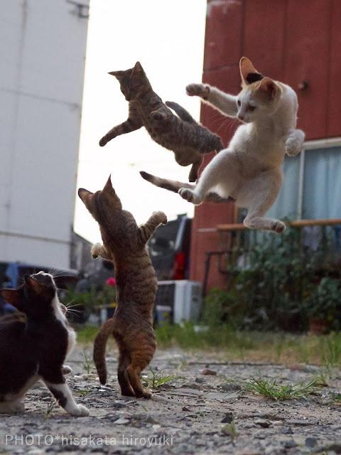 Chụp lén các boss mèo tập võ luyện chưởng
