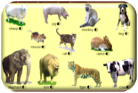 http://www.learningchocolate.com/en-gb/content/animals-1-0?st_lang=en