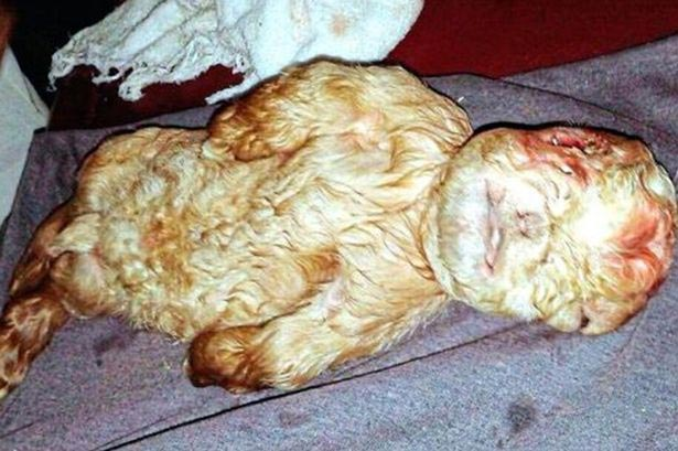 Farmer Discovers Newborn Goat With Human Face In Malaysia