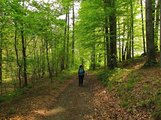 Zagłębiamy się w zieloności drzew i zarośli, kojących nas cieniem.