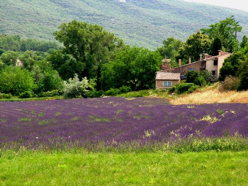 Vacanța Esoterică Provence Franta Violet Fermecator
