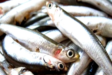 Foto de anchovetas con ojos abiertos