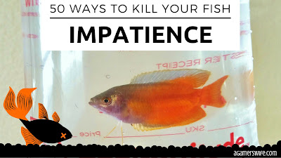 Patience is key to keeping happy, healthy fish