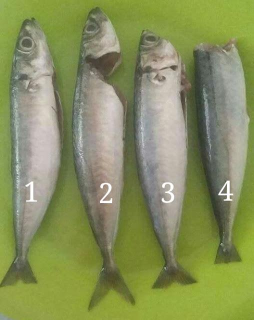 Cara Mudah dan Cepat Siang Ikan!