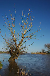http://upload.wikimedia.org/wikipedia/commons/4/49/Dead_tree_and_a_pair_of_cormorants_-_geograph.org.uk_-_1128531.jpg