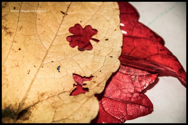 activité feuilles d'automne