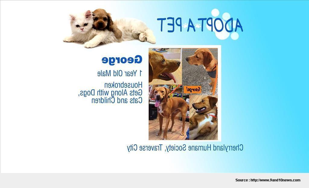 Pet Adoption Spokane