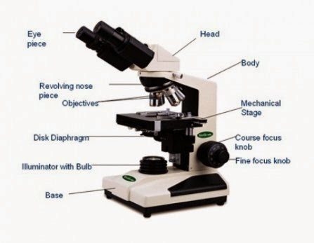 Compound Microscope Parts Essay Coursework Sample August 2019
