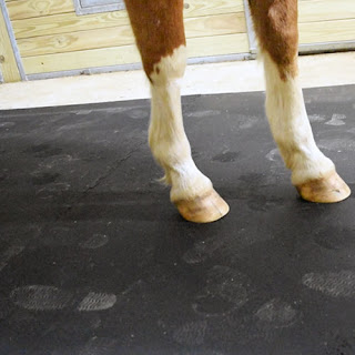 Greatmats how to keep horse stalls dry stall mats