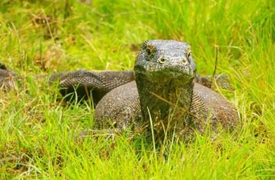 Komodo di Labuan Bajo, Surganya Para Traveller