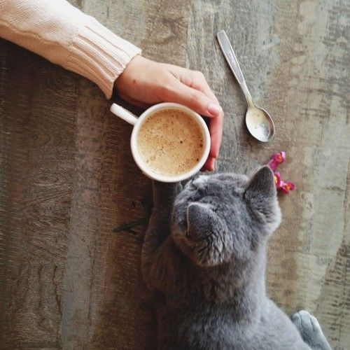 fall_inspiration_cat_coffee