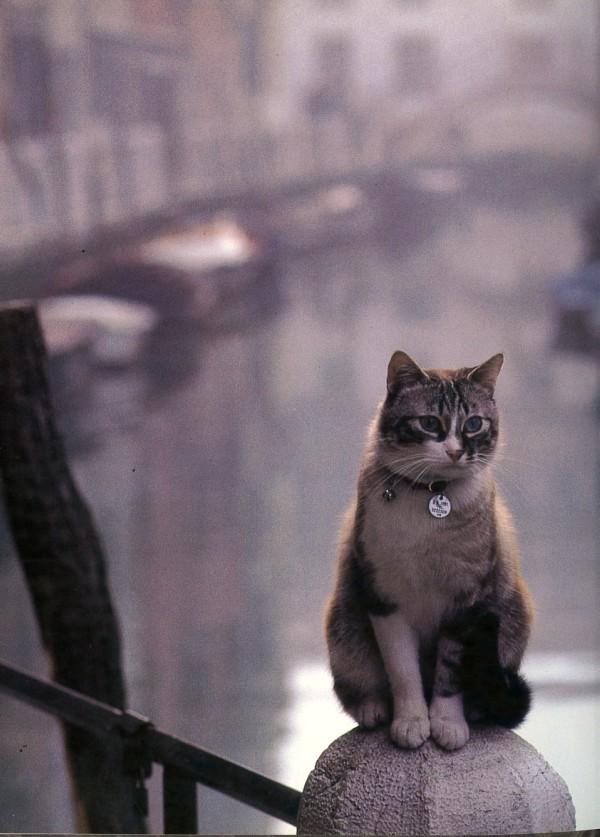 gatti venezia