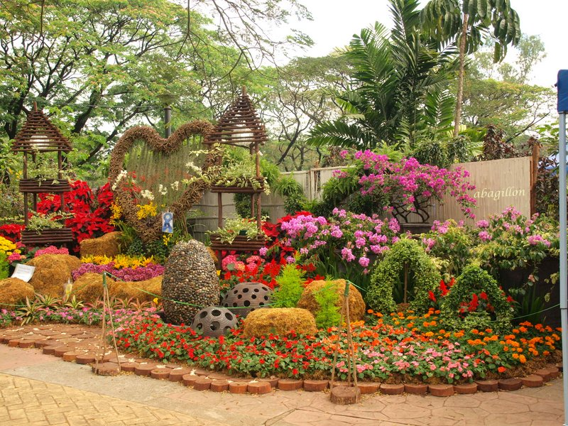 Andrea 39 s plants photos and travels philippines for Landscaping plants in the philippines