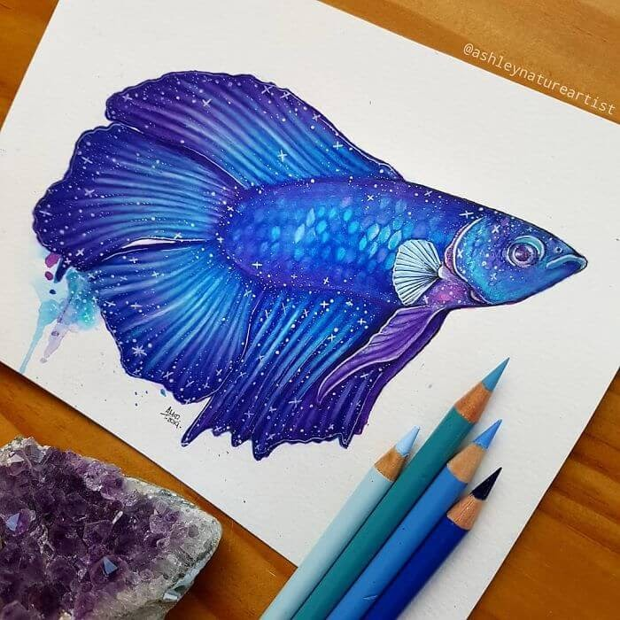 07-Betta-fish-Ashley-McDonald-www-designstack-co