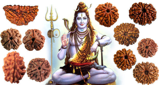 Types of Rudraksha