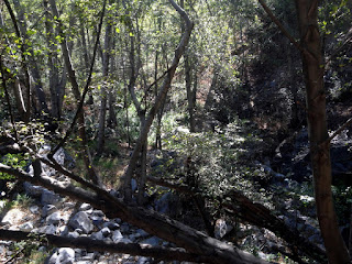 Woody scenery along Fish Canyon Trail, Angeles National Forest