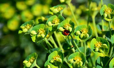 Ladybug | Atlanta Botanical Garden