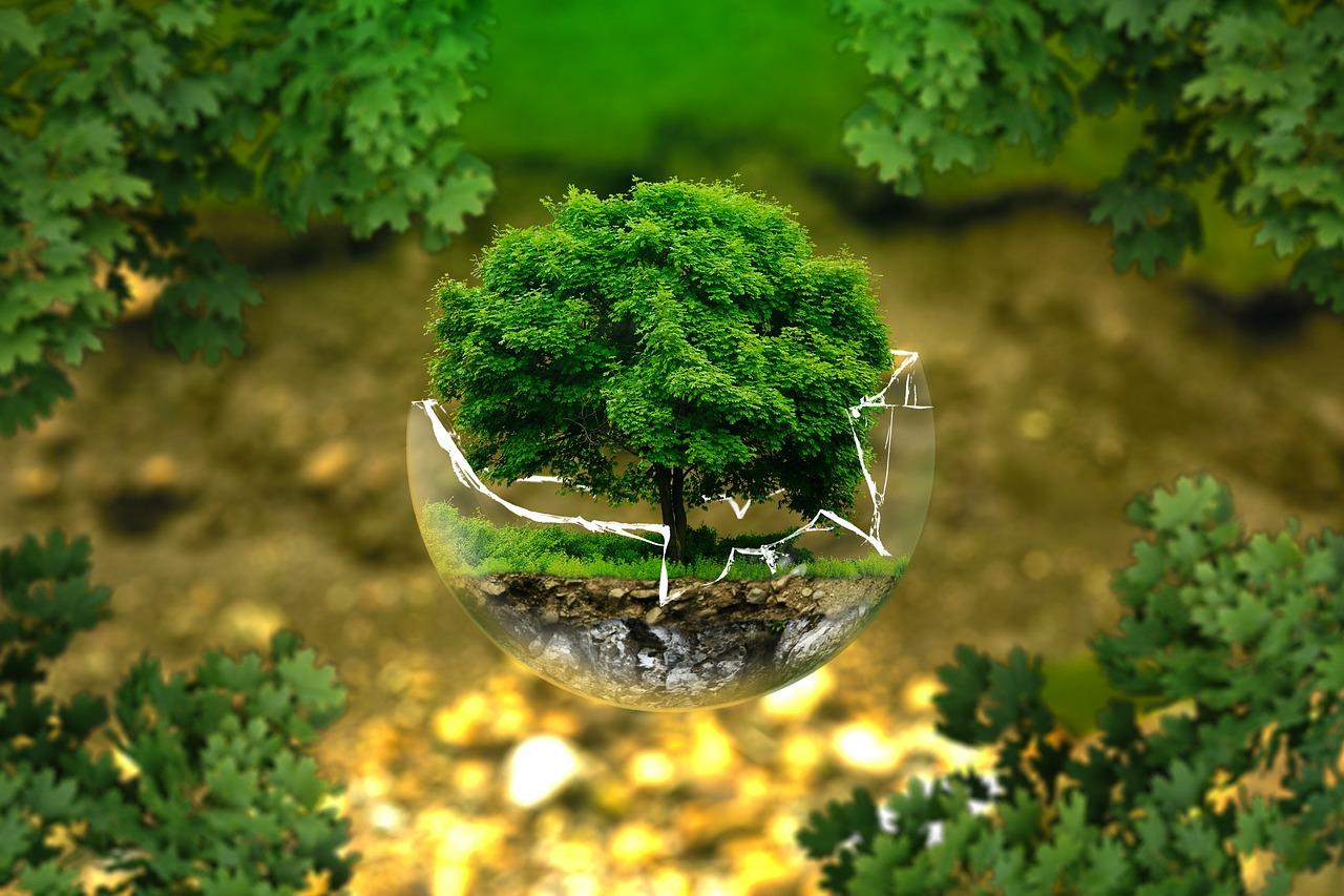 112 Definición Etimológica Y Literal De Ecología