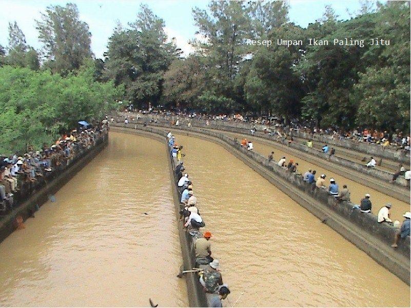 Umpan Ikan Patin Alami Di sungai