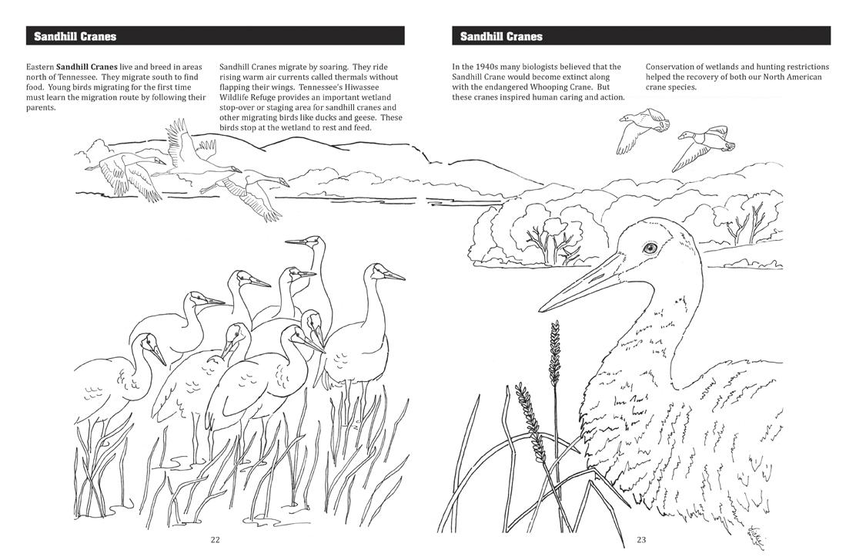 Vickie Henderson Art Discover Birds Activity Book