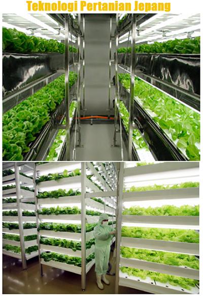 Teknologi Pertanian Jepang