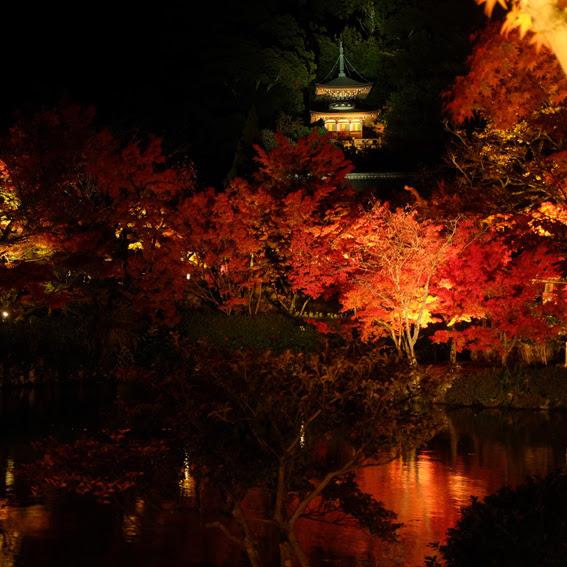 【京都】夜楓-醉在永觀