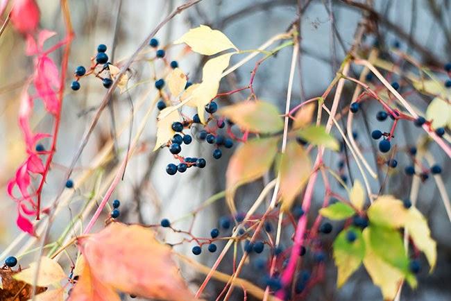 Herbstlaub-saarland-saarbruecken-fotografie