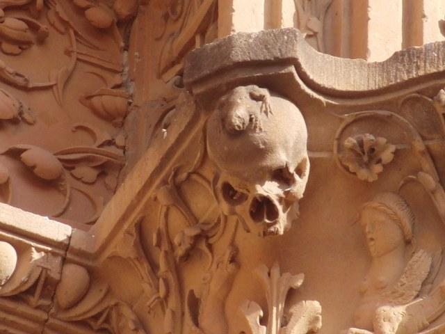 Rana ranita batracio Salamanca