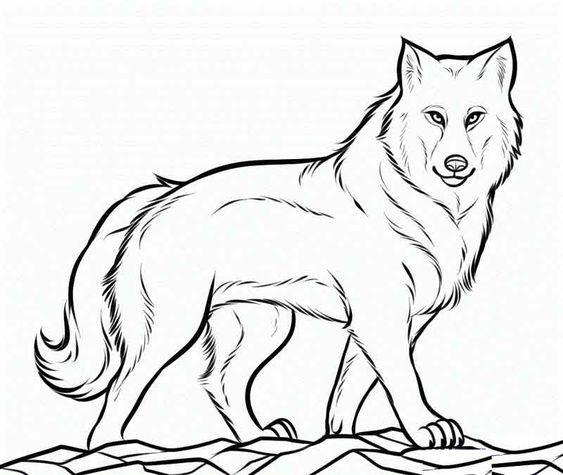 Tranh tô màu con sói đang di chuyển
